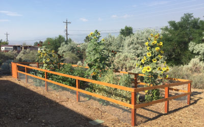 Welcome to our Blog – Gardening in Reno Nevada